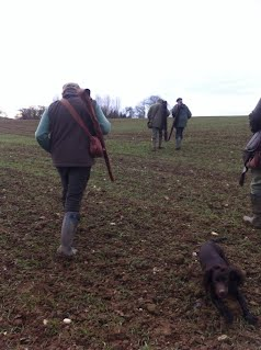 Palmershill Gundogs out working Jan 2015